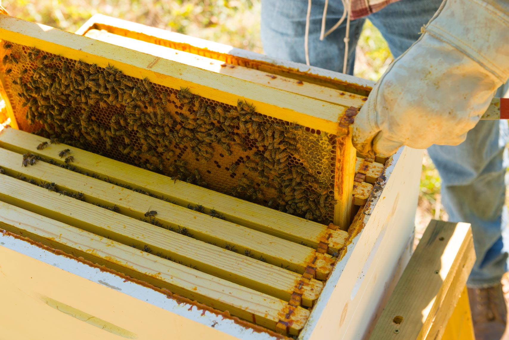 Beekeeping - Food & Farm To Table Photographer - Bucks County, Pennsylvania, New York, NYC, New Jersey